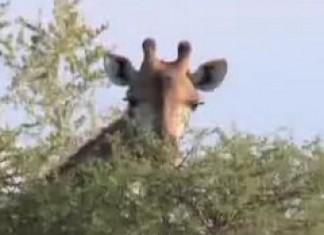 Sights of a safari